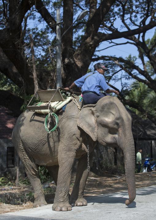 Elephant On The Road, Ngapali, Myanmar