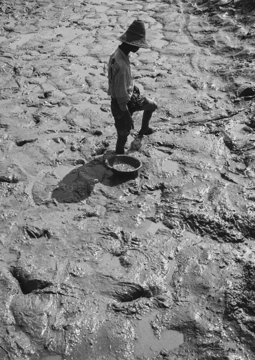 Fisherman Catching Small Fish In The Mud, Ngapali, Myanmar