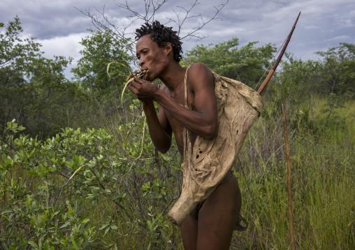 Bushman Collecting Medicinal Plants, Tsumkwe, Namibia