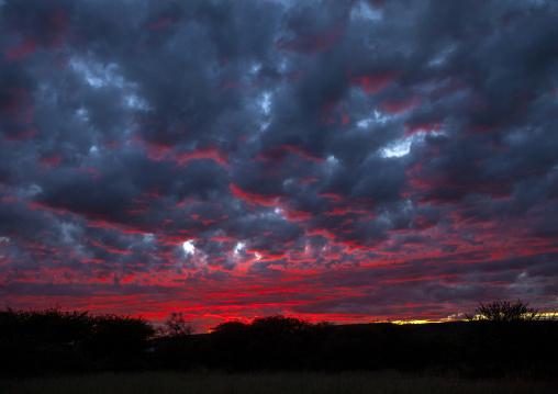 Red Sky, Okonjima, Namibia