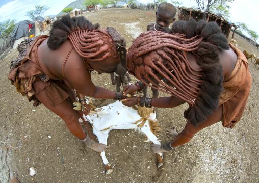 Himba Women Taking Care Of Goats, Epupa, Namibia