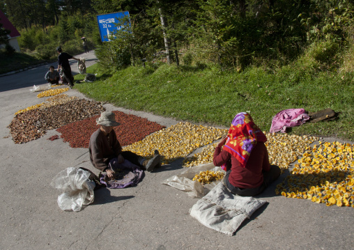 Two North Korean women drying mushrooms on the road, Ryanggang Province, Samjiyon, North Korea