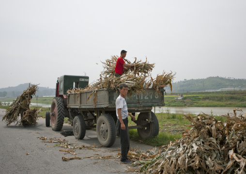 North Korean famers loading a truck with corns during the harvest times, Pyongan Province, Pyongyang, North Korea