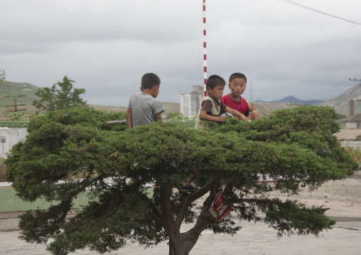 North Korean boys playing in a tree, North Hwanghae Province, Kaesong, North Korea
