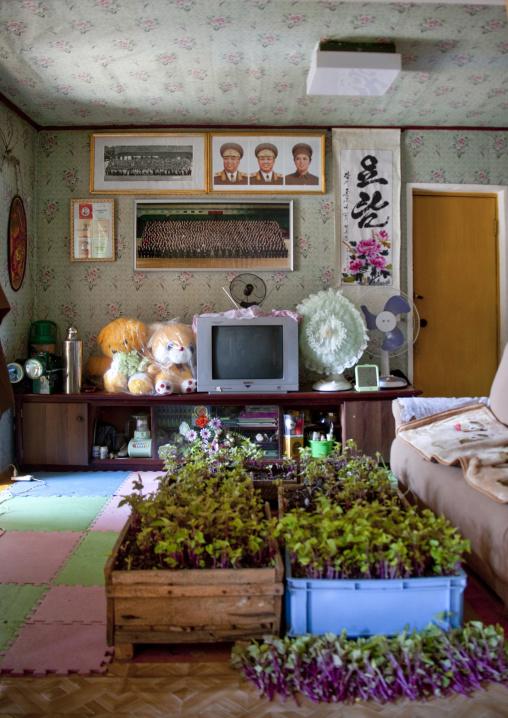 North Korean living room in a homestay, North Hamgyong Province, Jung Pyong Ri, North Korea