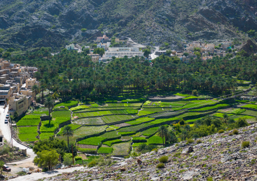 Village with lush green irrigated terraces, Al Hajar Mountains, Bilad Sayt, Oman