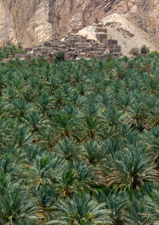 Old village in the middle of an oasis, Ad Dakhiliyah ‍Governorate, Birkat Al Mouz, Oman
