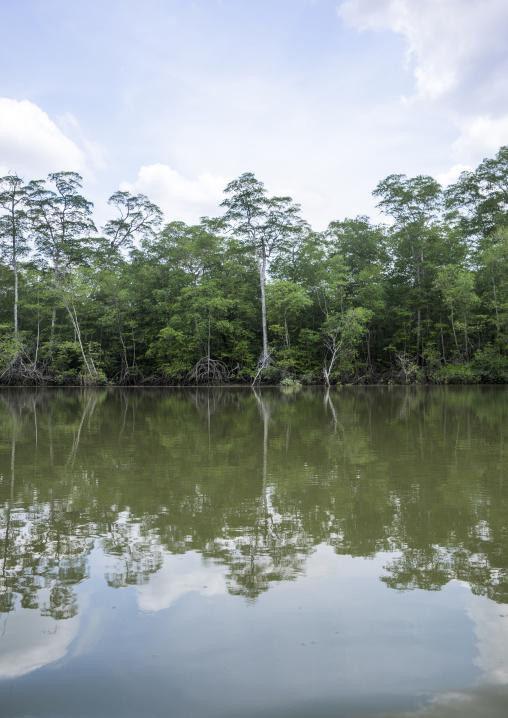Panama, Darien Province, Puerta Lara, Rain Forest