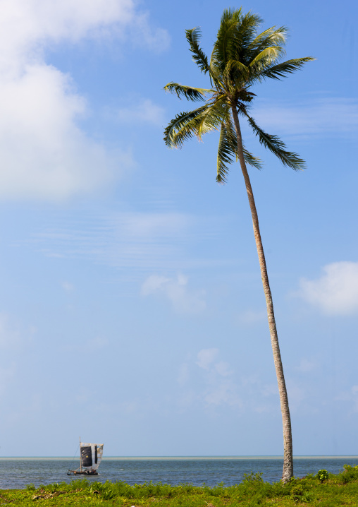 Palm tree on the beautiful deserted kaibola beach, Milne Bay Province, Trobriand Island, Papua New Guinea