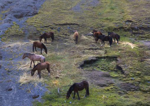 Horses During The Qoyllur Riti Festival, Ocongate Cuzco, Peru