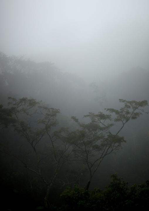 Fog in the forest, Nyungwe Forest National Park, Gisakura, Rwanda