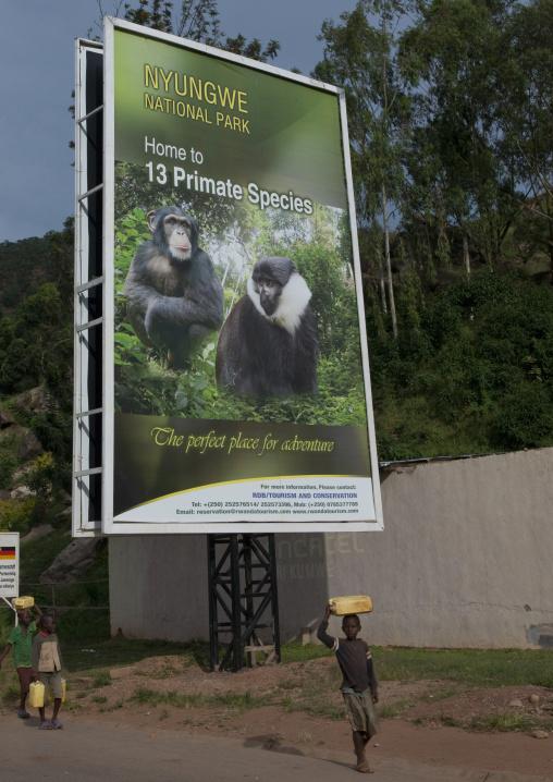 Advertisement billboard depicting monkeys in nyungwe national park, Kigali Province, Kigali, Rwanda