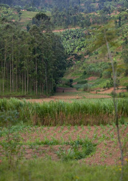 Farm in the countryside, Northwest Province, Rehengeri, Rwanda