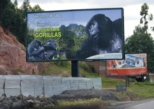Advertisement billboard depicting gorillas in volcanoes national park, Northwest Province, Rehengeri, Rwanda