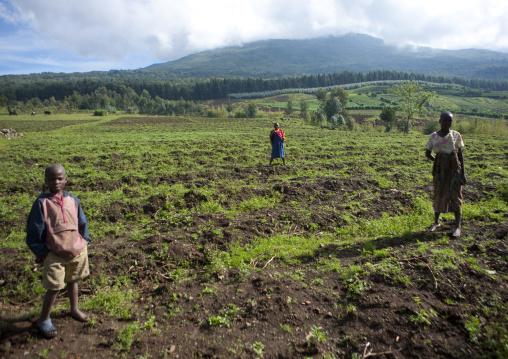 Rwandan people working in a farm in the volcanoes national park, Northwest Province, Rehengeri, Rwanda