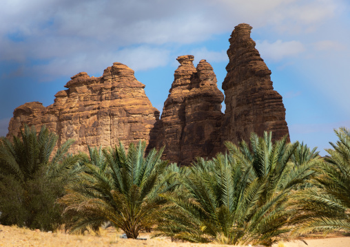 Palm trees in the oasis of jebel Dedan, Al Madinah Province, Alula, Saudi Arabia