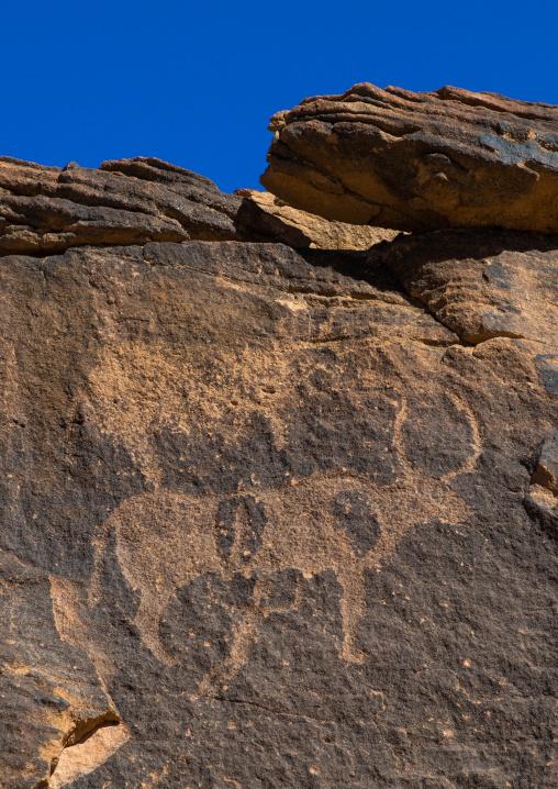 Petroglyphs on a rock depicting cows, Najran Province, Najd Khayran, Saudi Arabia