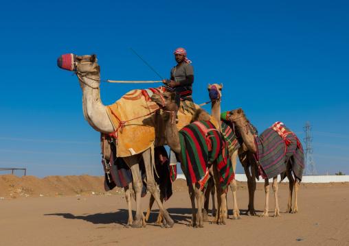 Training for camel racing in the Rub' al Khali empty quarter desert, Najran province, Hubuna, Saudi Arabia