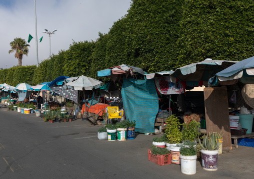 Women market, Asir province, Abha, Saudi Arabia
