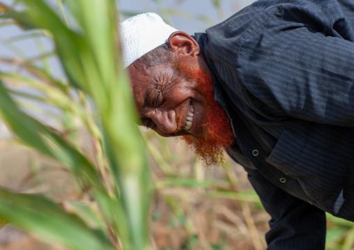 Red beard saudi man on the tihama coast harvesting, Jizan Region, Jizan, Saudi Arabia