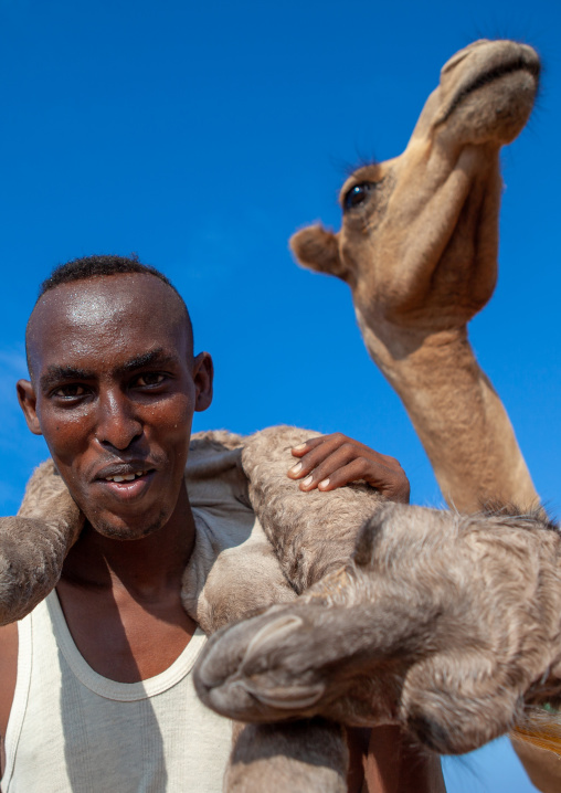 A somali man is holding a new born baby camel on his back, Awdal region, Lughaya, Somaliland