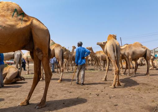 Somali man in the camel market, Woqooyi Galbeed region, Hargeisa, Somaliland