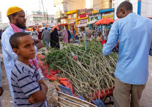 Somali man selling natural toothbrushes in the street, Woqooyi Galbeed region, Hargeisa, Somaliland