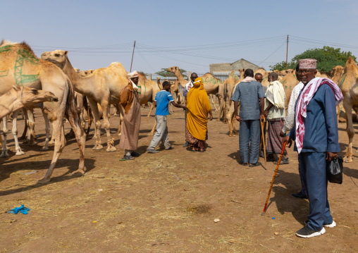 Somali people in a camel market, Woqooyi Galbeed region, Hargeisa, Somaliland