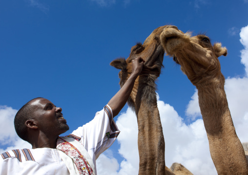 One man with two camels, Hargeisa livestock market, Somaliland