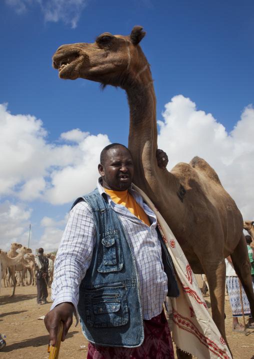 A man bringing his camel to hargeisa livestock market, Hargeisa, Somaliland