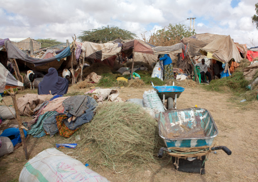 Fodder for animals in a market, Woqooyi galbeed region, Hargeisa, Somaliland