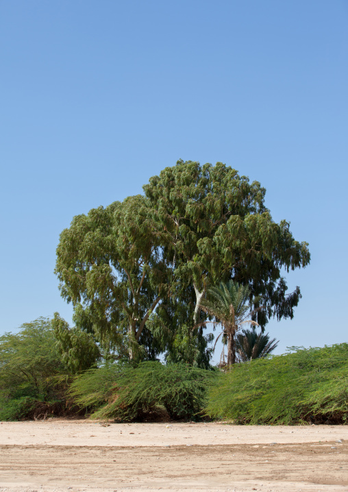 Trees over a dry river, Woqooyi galbeed region, Hargeisa, Somaliland