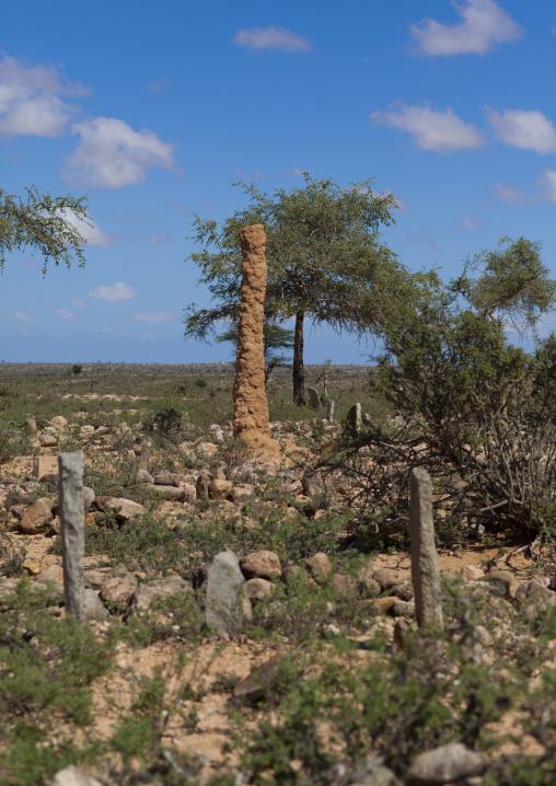 An ant hill column near some graves, Near lasadacwo village, Somaliland