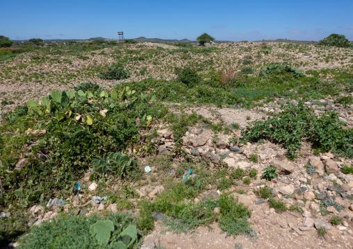 Ruins in sheikh mountains, Togdheer, Sheikh, Somaliland