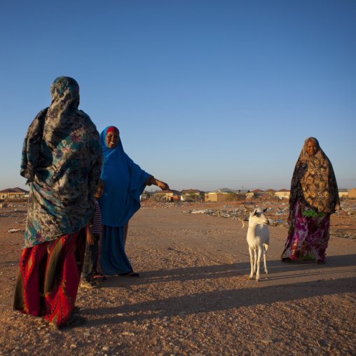 Three mature women and a young boy walking in the wasteland with a goat, Burao, Somaliland