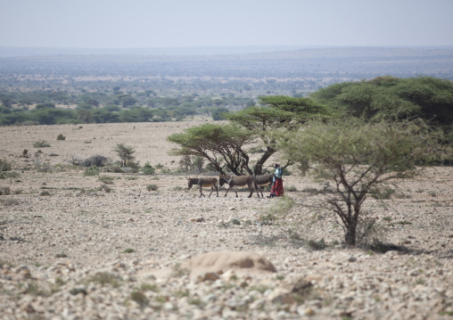 A woman walking with three donkeys in a rocky landscape, Near burao, Somaliland