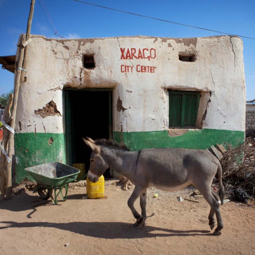 A wandering mule passing by a decrepit house in the city center, Baligubadle, Somaliland