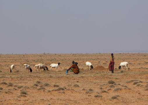 Two people with a flock of sheep in a flat landscape in the desert, Degehabur area, Somaliland