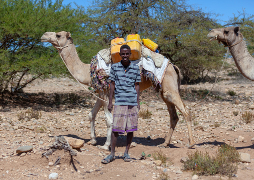 A somali man transporting water in yellow containers through the desert on camel back, Awdal region, Zeila, Somaliland