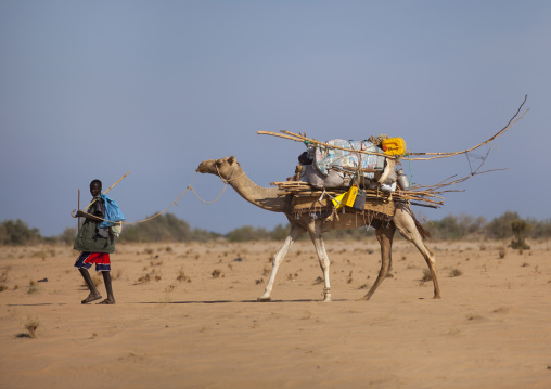 A man carrying an aqal soomaali somali hut on the back af a camel, Zeila, Somaliland