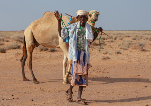 A somali man with his camel in the desert, Awdal region, Zeila, Somaliland