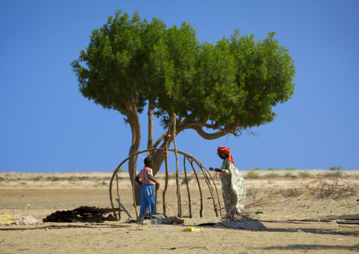 A senior woman and a child building a hut near a tree, Near zeila, Somaliland