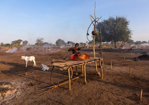 Mundari tribe boy resting on a wooden bed in the middle of his long horns cows, Central Equatoria, Terekeka, South Sudan