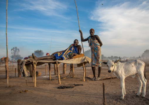 Mundari tribe man resting on a wooden bed in the middle of his long horns cows, Central Equatoria, Terekeka, South Sudan