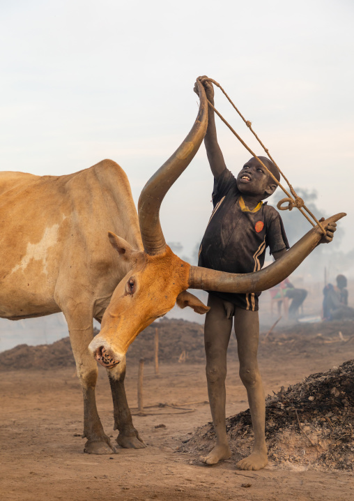 Mundari tribe boy putting a rope around the horns of a cow, Central Equatoria, Terekeka, South Sudan