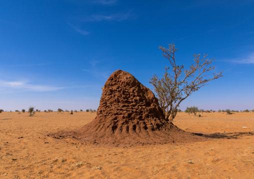 Termite mound in an arid area, Khartoum State, Khartoum, Sudan