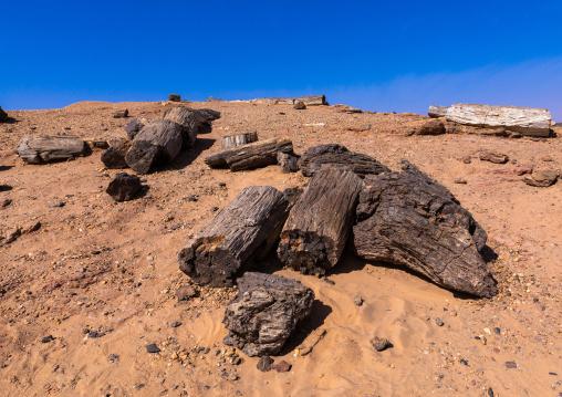Petrified wood in the desert, Northern State, El-Kurru, Sudan