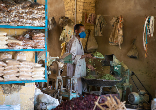Sudanese worker crashing some dried leaves, Northern State, Karima, Sudan
