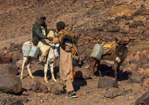 Bisharin nomad men with donkeys collecting salt in Atrun crater, Bayuda desert, Atrun, Sudan