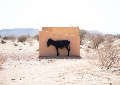 Donkey in the shade, Nubia, Musawwarat es-Sufra, Sudan
